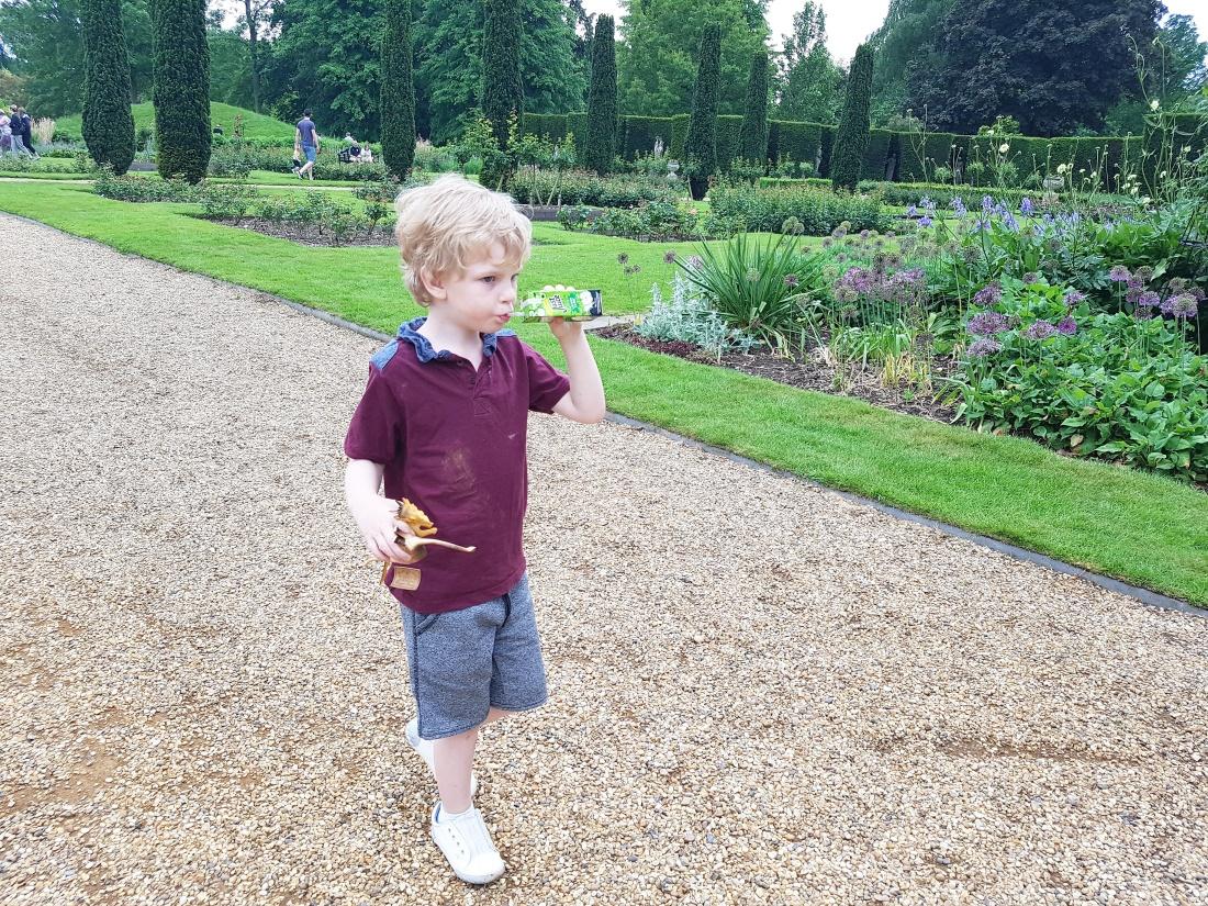 Sonny in Knebworth gardens
